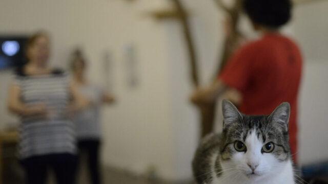 yoga con gato